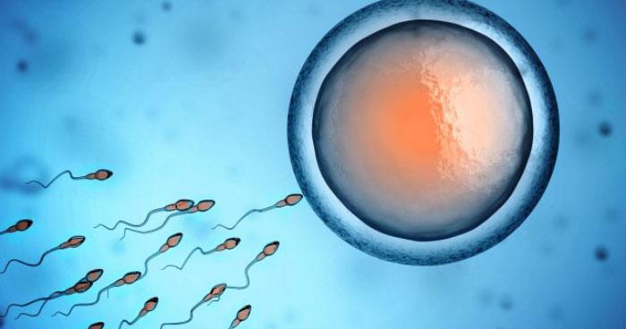 egg conception featureA - خانمهای مسن هم میتوانند باردار شوند!