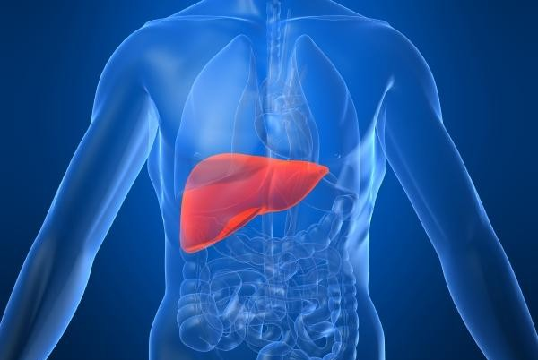ssiimm human liver e1371158573317 - دلایل به وجود آمدن کبد چرب