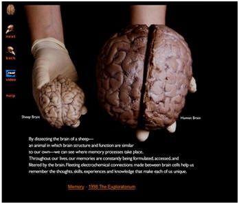 ssiimm bc0293f4b1e091bf7eb6d2c83297399e - علت بزرگی مغز انسان